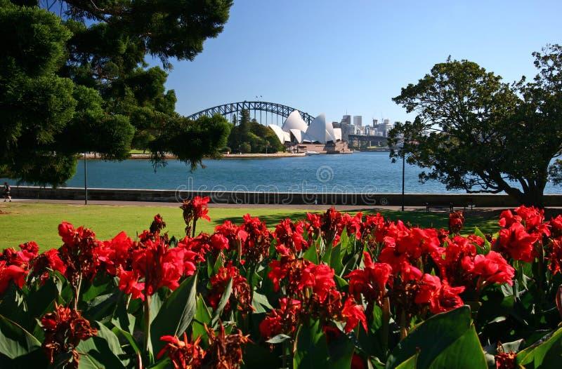 Fleurs, arbres et herbe rouges de bord de mer au jardin botanique royal avec le paysage urbain iconique de Sydney Opera House et  photos libres de droits