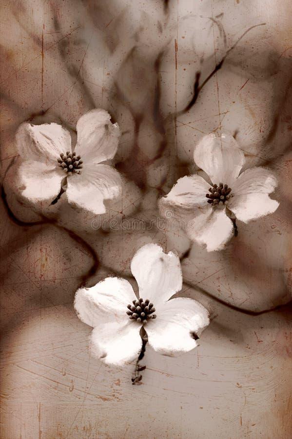 Fleurs artistiques de cornouiller de sépia photos libres de droits