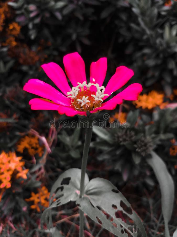 Fleurs assez roses photo stock