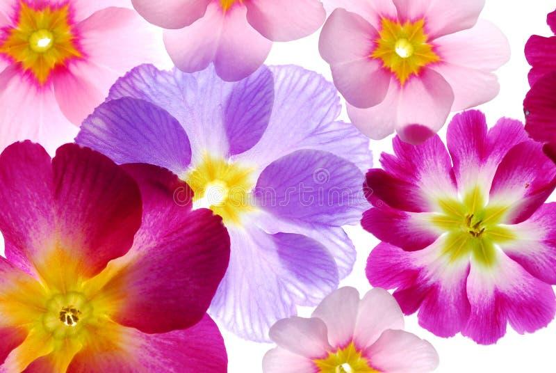 Fleurs assorties de source photos libres de droits