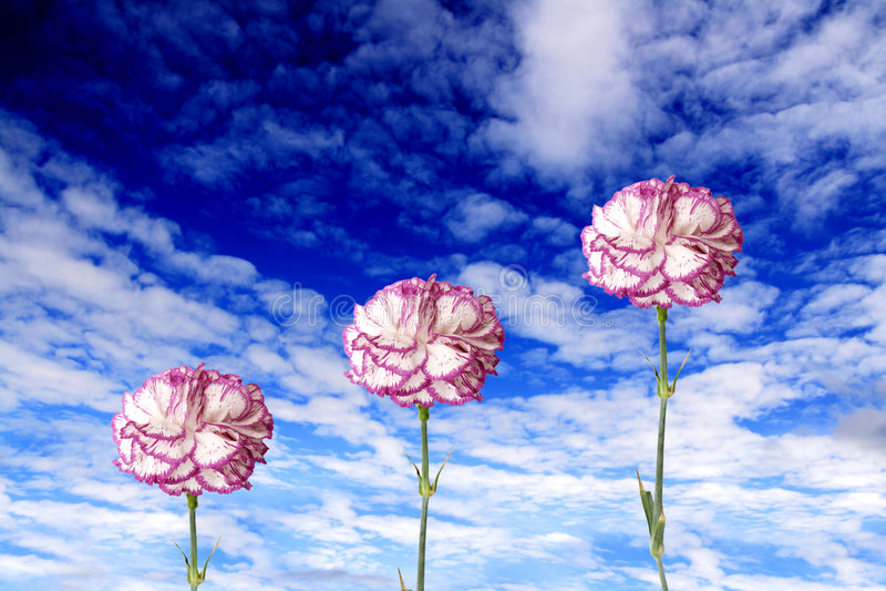Fleurs au ciel photo libre de droits