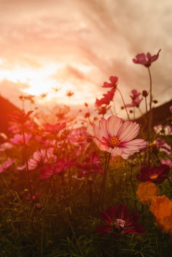 Fleurs au coucher du soleil photos libres de droits