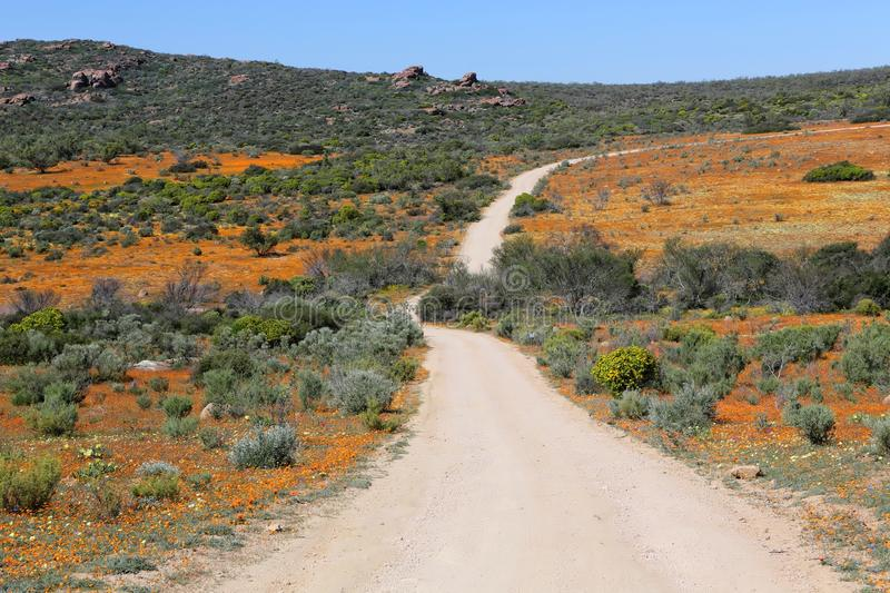 Fleurs au parc national de namaqualand image stock