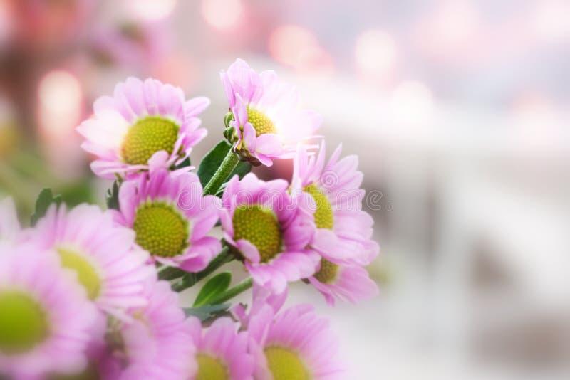 Fleurs au printemps photographie stock libre de droits