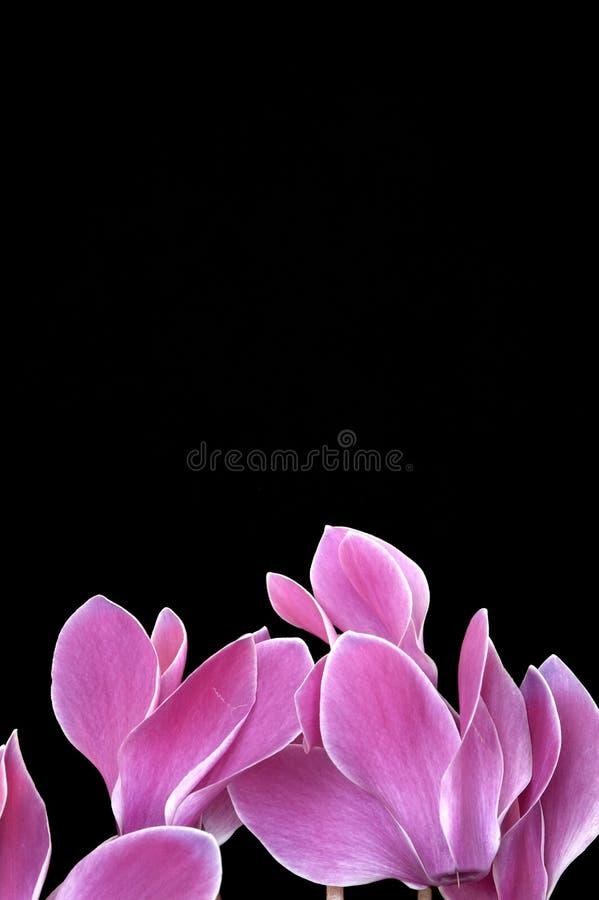 Fleurs avec l'espace photographie stock libre de droits