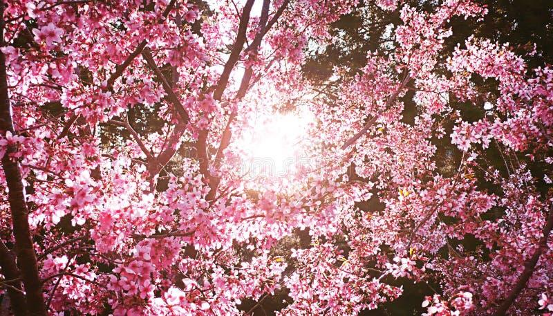 Fleurs avec la lumière du soleil images libres de droits