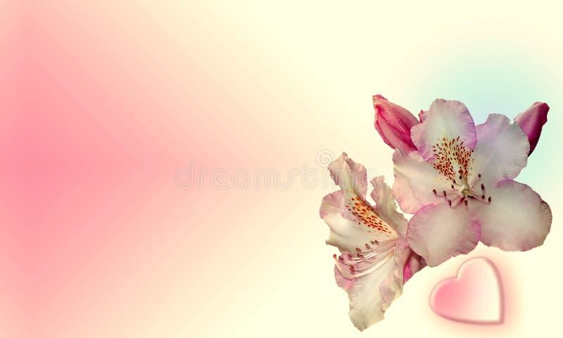 Fleurs avec le fond rose illustration stock