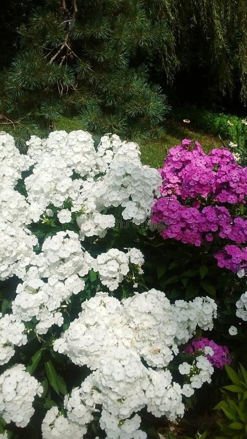 Fleurs avec le pin à l'arrière-plan images libres de droits