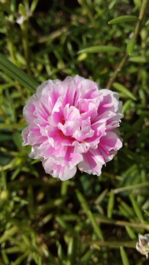 Fleurs belles le matin photos libres de droits