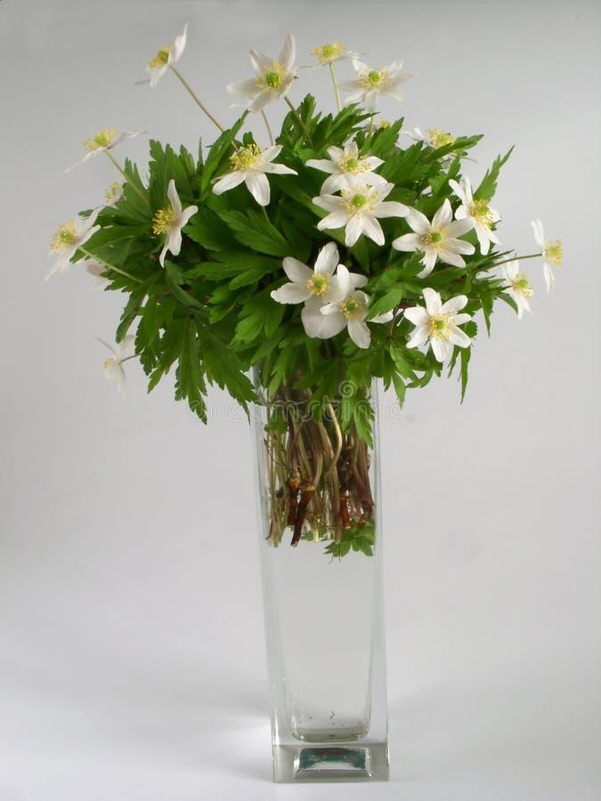 Fleurs blanches photographie stock libre de droits