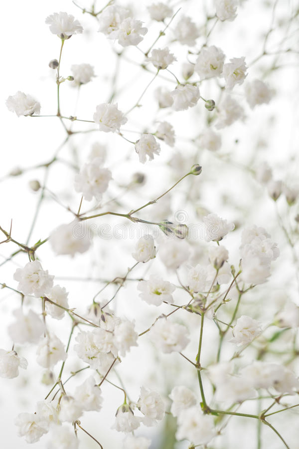 Fleurs blanches image stock