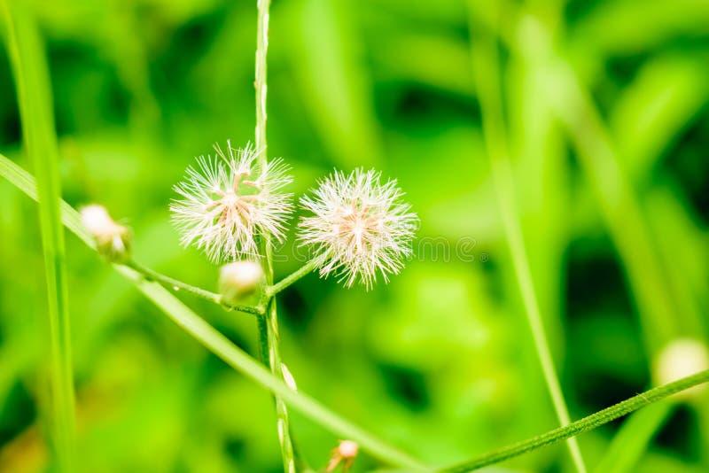 Fleurs blanches avec le fond d'herbe images stock