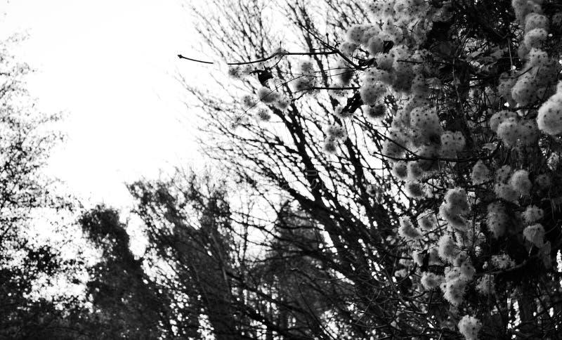 Fleurs blanches brouillées photo libre de droits
