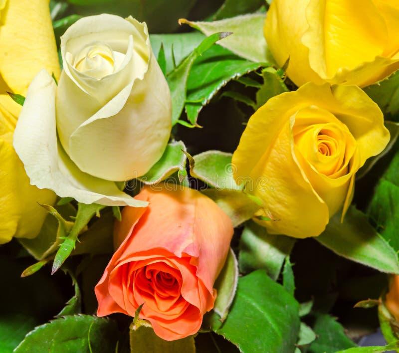 Fleurs blanches, d'orange et de rose de jaune, détails, fin  photographie stock