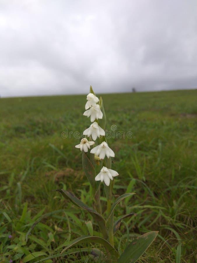 Fleurs blanches dans la terre d'herbe photos libres de droits