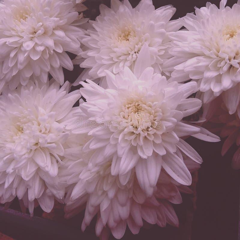 Fleurs blanches dans les jardins image libre de droits
