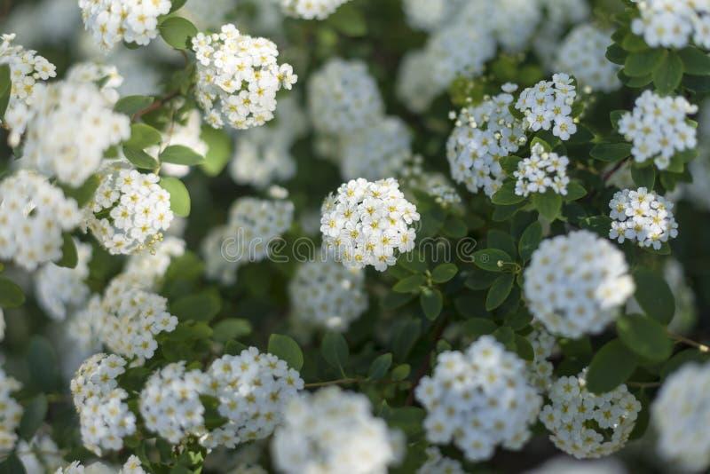 Fleurs blanches dans un jardin botanique 3 photographie stock libre de droits