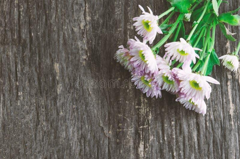 Fleurs blanches de chrysanthème sur le fond en bois photos stock