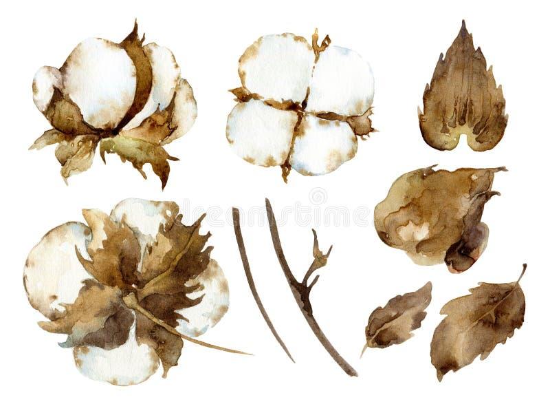 Fleurs blanches de coton illustration de vecteur