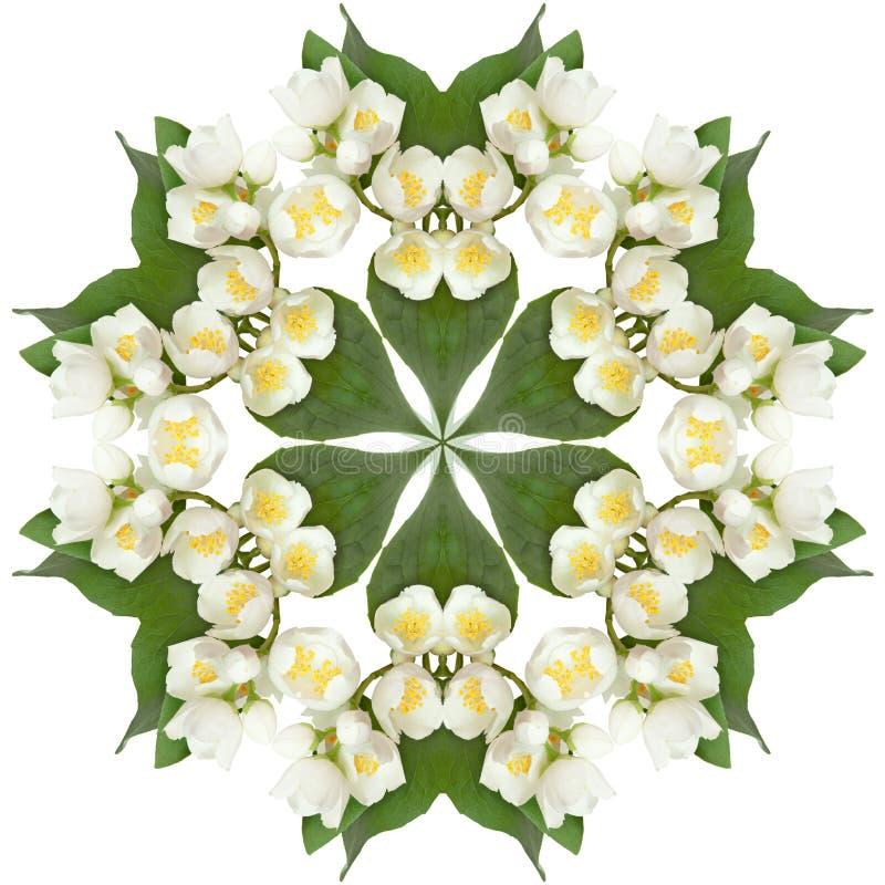 Fleurs blanches de jasmin image stock