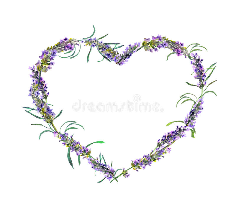Fleurs blanches de lavande vues étroitement vers le haut Cadre floral de coeur d'aquarelle illustration stock