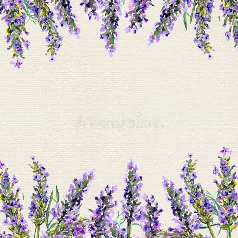 Fleurs blanches de lavande vues étroitement vers le haut Frontière d'aquarelle illustration libre de droits