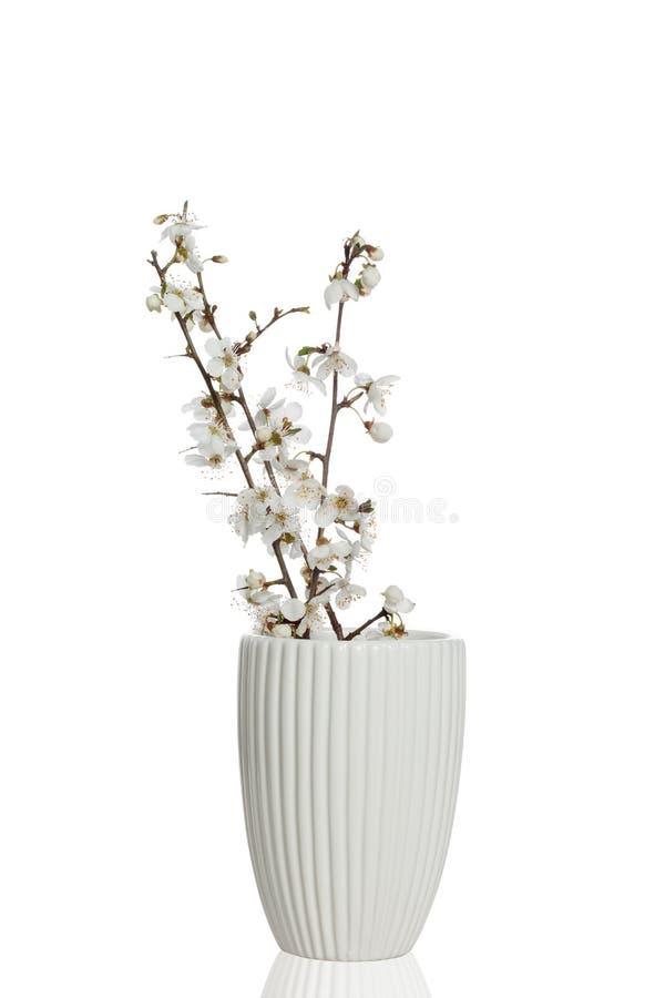 Fleurs blanches de ressort images stock