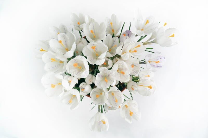 Fleurs blanches de ressort tendre photographie stock libre de droits