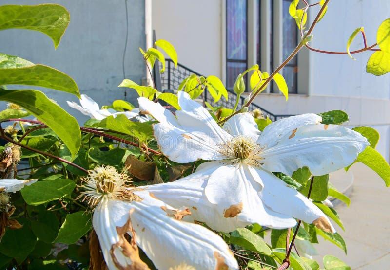 Fleurs blanches et banistrs forgés Étapes dans l'église moderne image stock