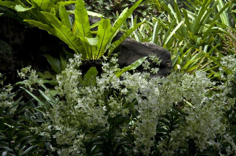 Fleurs blanches et feuilles de plantes tropicales image libre de droits