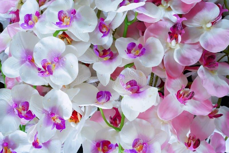 Fleurs blanches et roses artificielles d'orchidée photos stock