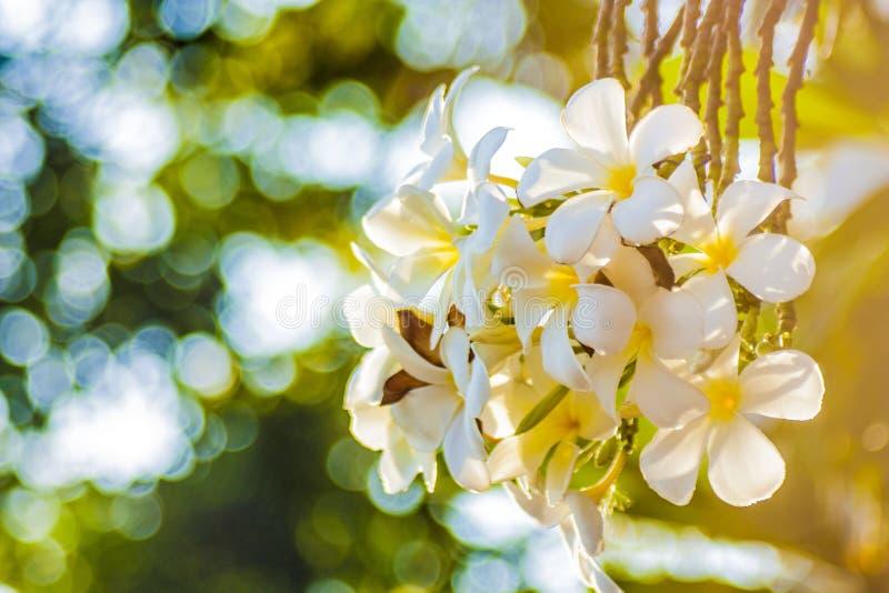 Fleurs blanches juste sur le lever de soleil image stock
