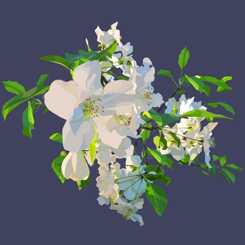 Fleurs blanches peintes d'un pommier de floraison illustration stock