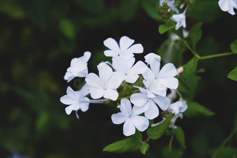 Fleurs blanches sur le fond brouillé vert photographie stock libre de droits