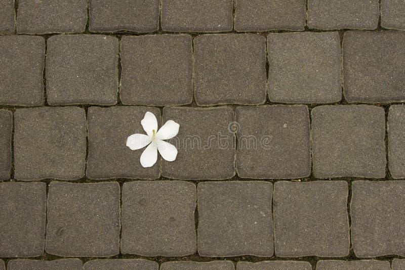 Fleurs blanches tombant sur le fond du bloc de briques de Footpath pour l'espace de copie et le sens abstrait photographie stock