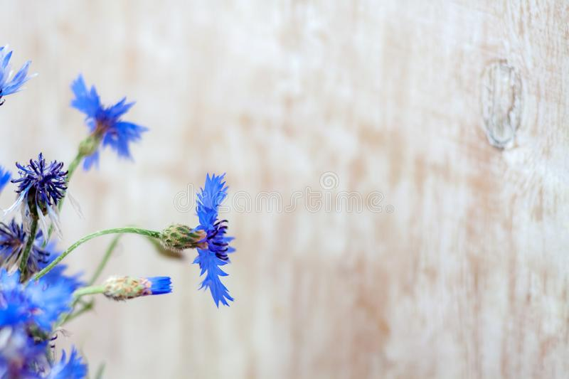 fleurs bleues de fleurs de maïs sur fond de bois clair Haute résolution Bannière Fermeture image stock