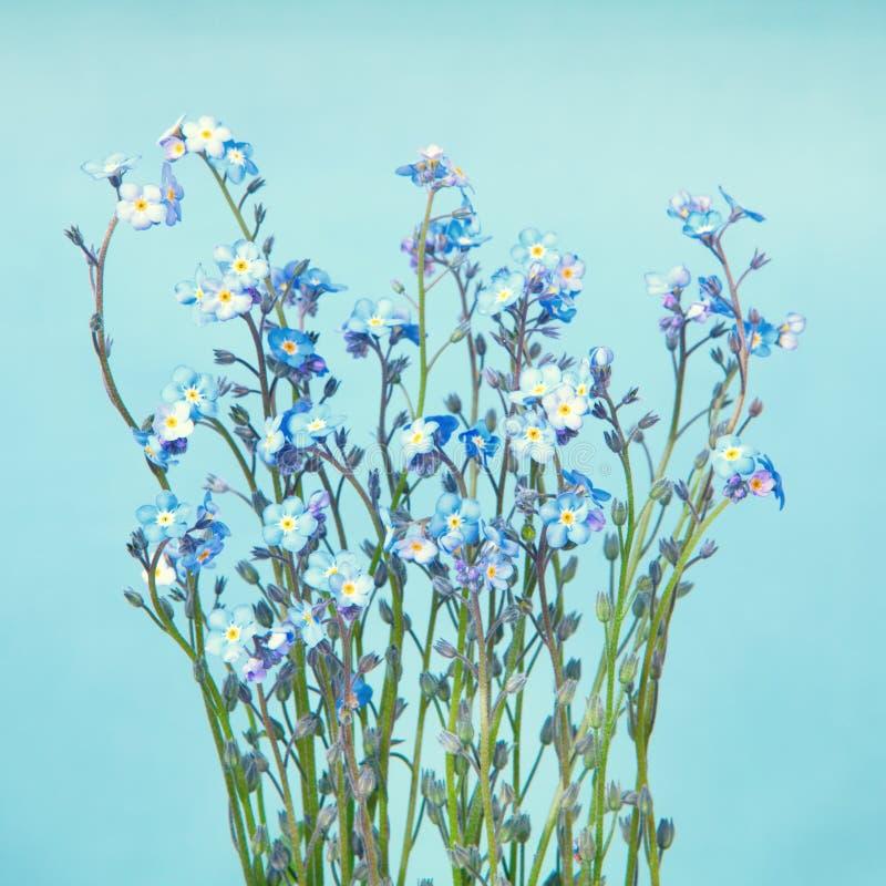 Fleurs bleues de myosotis photographie stock libre de droits