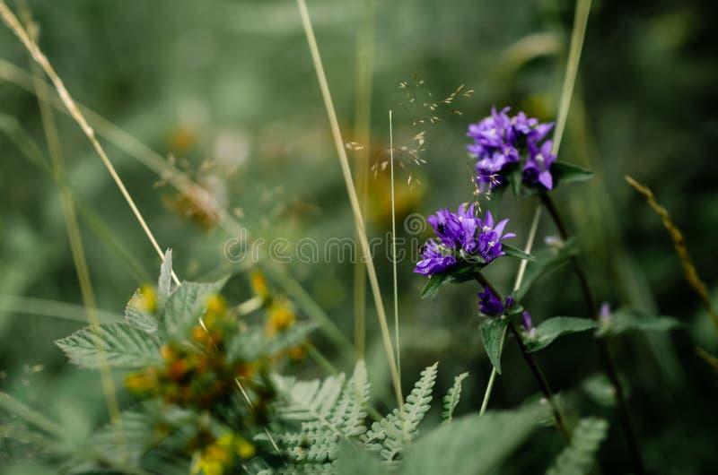Fleurs bleues de nature dans la forêt verte images libres de droits