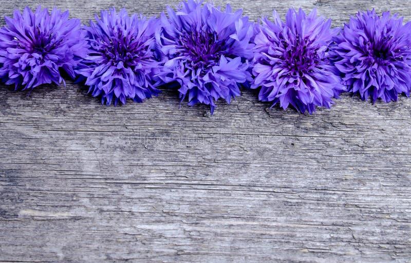 Fleurs bleues des bleuets sur un fond en bois images libres de droits