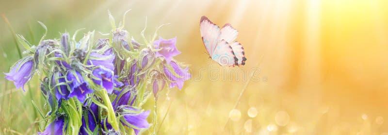 fleurs bleues et papillon de pré sauvage sur le fond de lumière du soleil de matin Fond de gisement de ressort L'espace de copie, image libre de droits