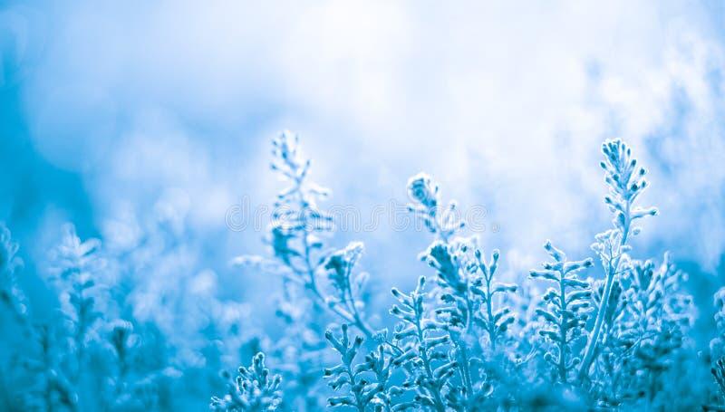 Fleurs bleues fond, conception de fleur de ressort images libres de droits