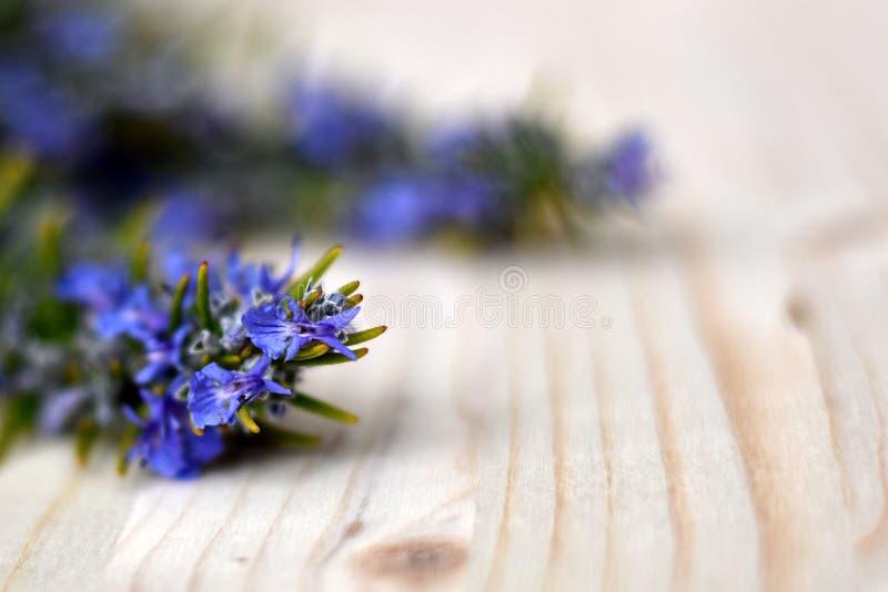Fleurs bleues minuscules de romarin photographie stock libre de droits
