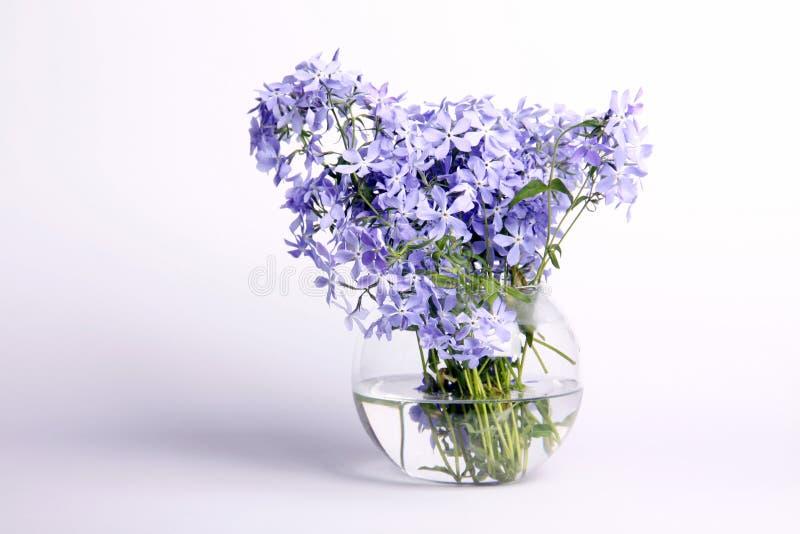 Fleurs bleues sensibles photos libres de droits