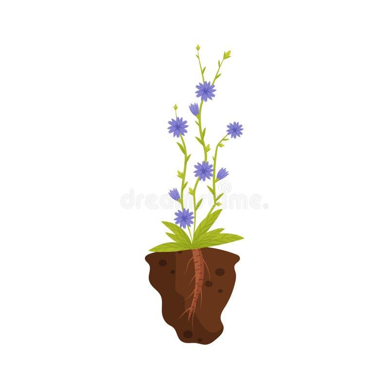 Fleurs bleues sur une tige mince Illustration de vecteur illustration stock