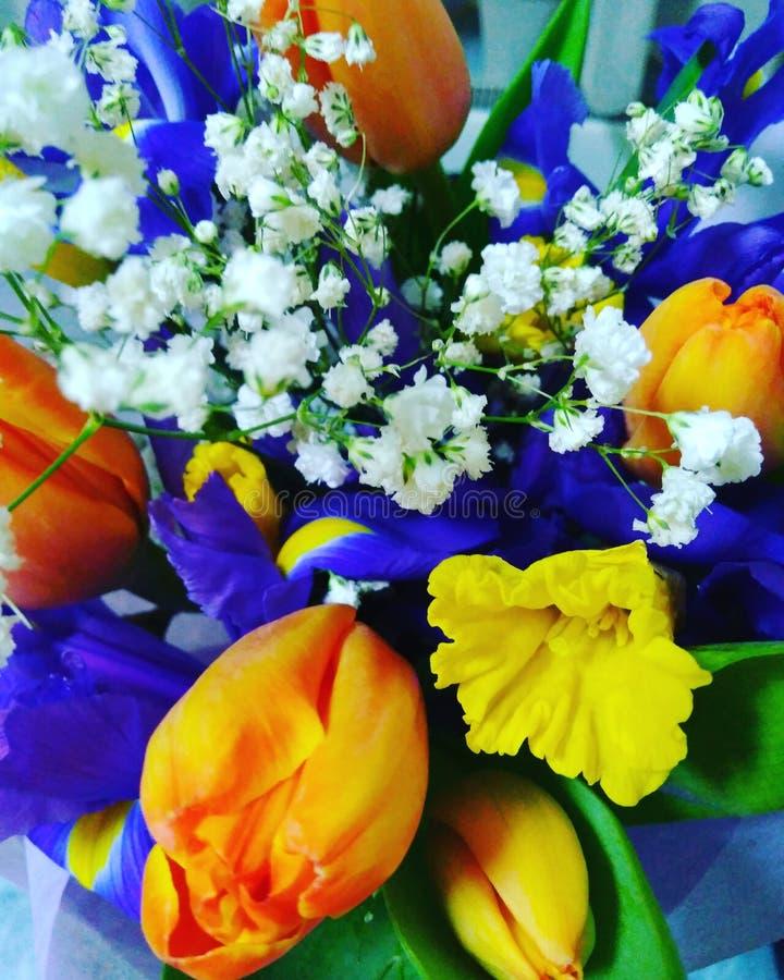 Fleurs blommor, vår, guling, sprej royaltyfria foton