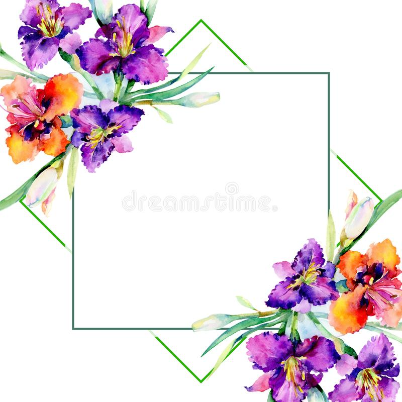Fleurs botaniques florales de bouquet pourpre de daylily Ensemble d'illustration de fond d'aquarelle Place d'ornement de frontièr photos stock