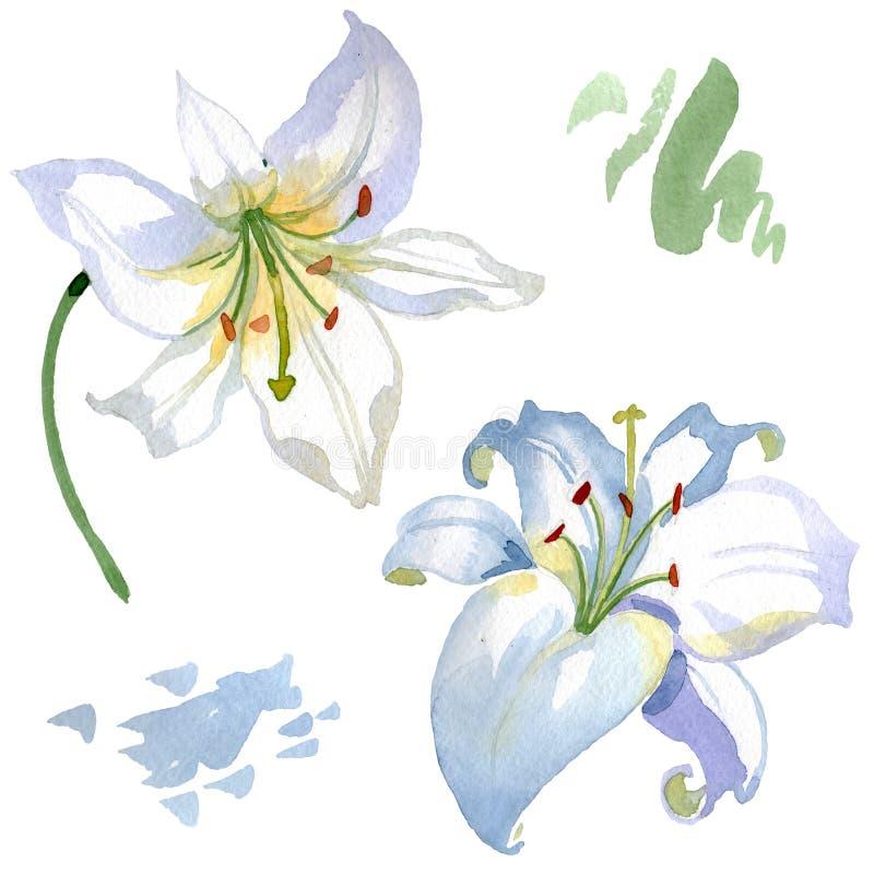 Fleurs botaniques florales de lis blanc Ensemble d'illustration de fond d'aquarelle ?l?ment d'isolement d'illustration de lis photo stock