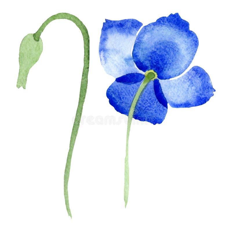 Fleurs botaniques florales de pavot bleu Ensemble d'illustration de fond d'aquarelle ?l?ment d'isolement d'illustration de pavots illustration de vecteur