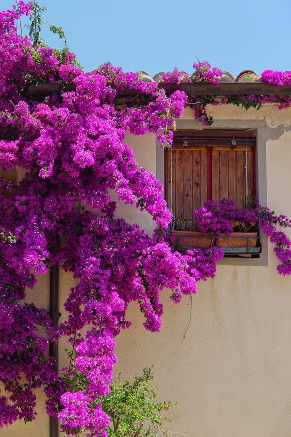 Fleurs bouclées sur le fond de la vieille fenêtre image libre de droits
