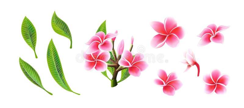 Fleurs, branches tropicales et feuilles de plumeria de rose de vecteur r?gl?es pour la carte florale illustration libre de droits